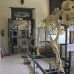 Museum-Biologi Jogja